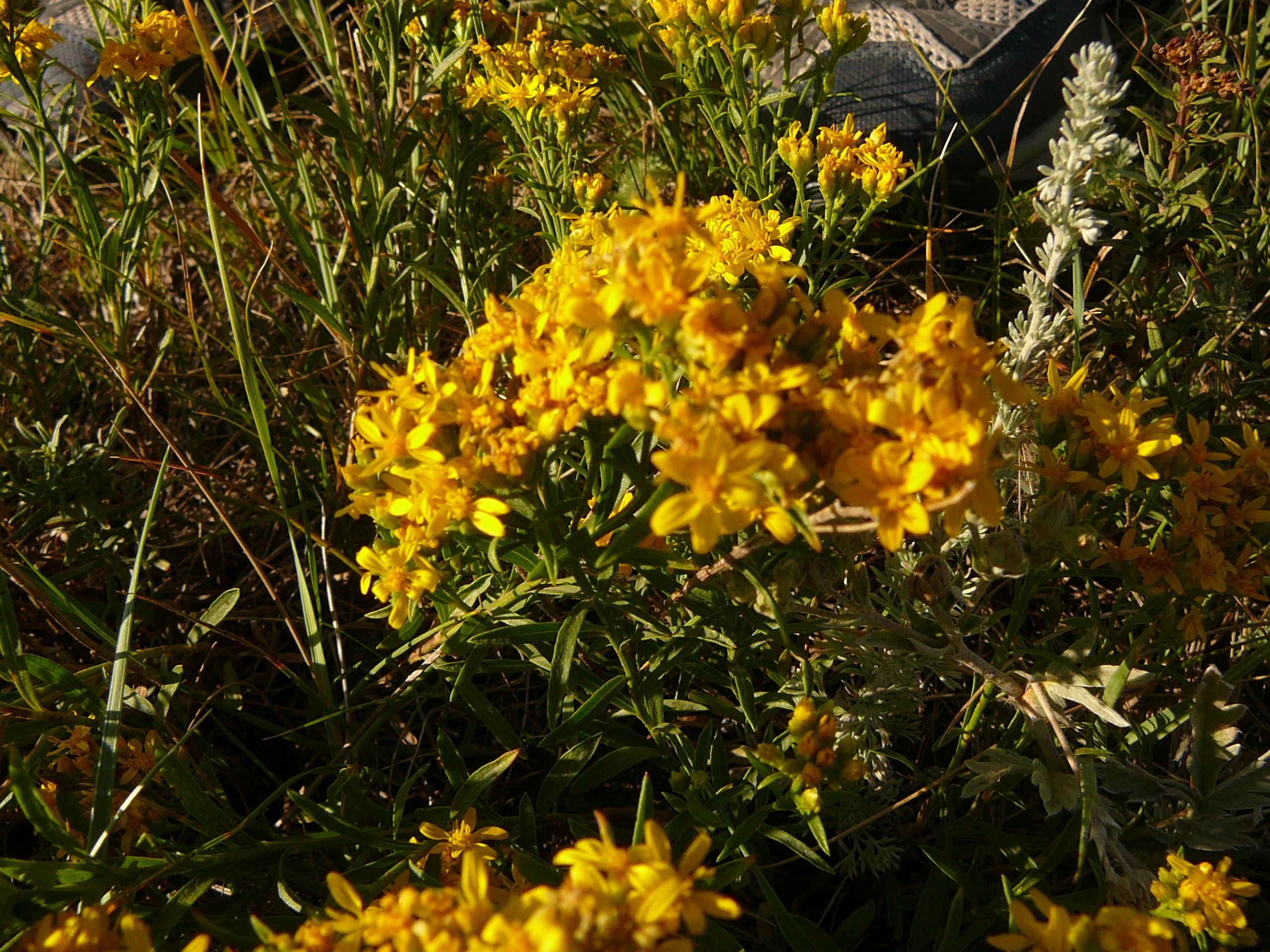 garden prairie muslim (815) 597-1700 11120 us hwy 20 garden prairie, il 61038.