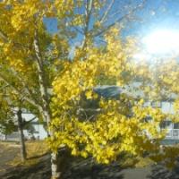 Autumn LeafActivities