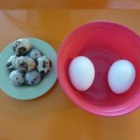 Q for Quail Eggs