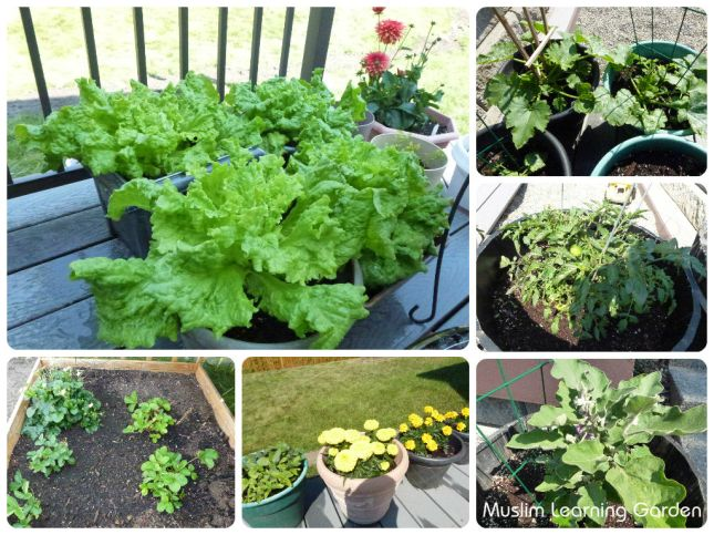 Plants 2014